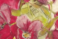 Tulipes-50-x-50