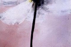 pavotblanc