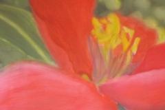 Fleur-rouge-1-150x50-2