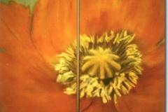 diptyque-pavot-orange