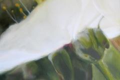 Cerisier-duo-1-50x50