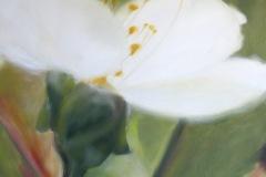 Cerisier-duo-2-50x50