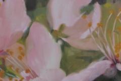 Cerisier-sauvage-2