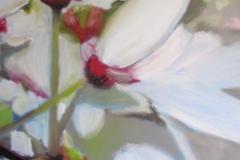 Cerisier-sauvage