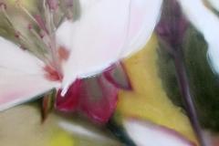 Fleurs de Ceriser 40 x 80