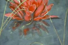 Lotus-rouge